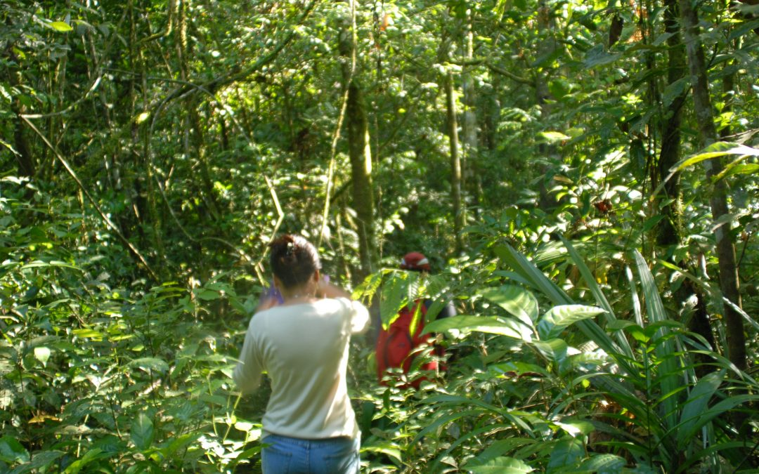 Hiking adventures in the Guianas